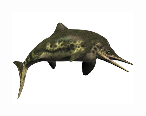 Stenopterygius was an ichthyosaur from the Jurassic Period by Corey Ford