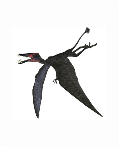 Dorygnathus, a genus of pterosaur from the Jurassic Period. by Corey Ford
