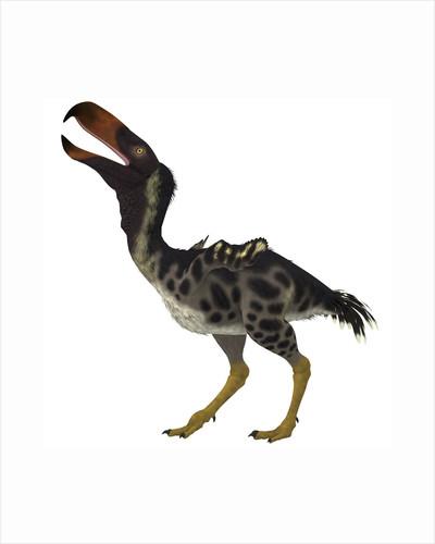 Kelenken is an extinct genus of giant flightless predatory birds. by Corey Ford