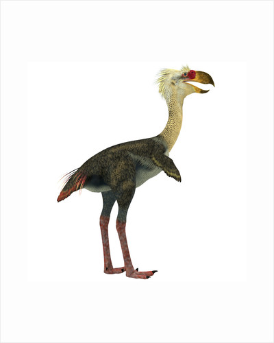 Phorusrhacos, an extinct genus of flightless predatory birds by Corey Ford