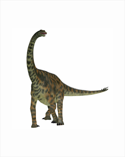 Spinophorosaurus is a sauropod dinosaur from the Jurassic Period. by Corey Ford