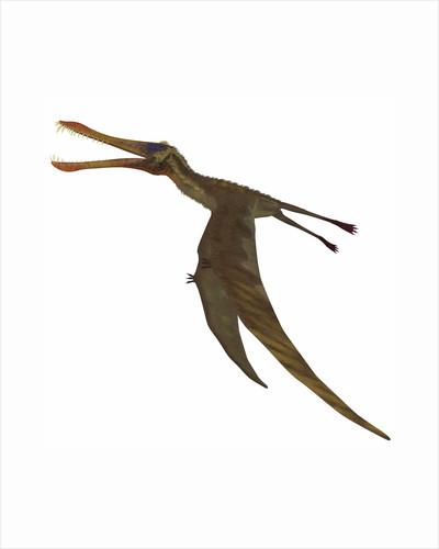 Anhanguera dinosaur. by Corey Ford
