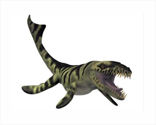 Dakosaurus, white background. by Corey Ford