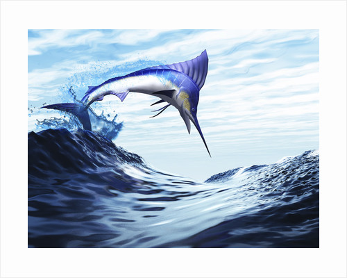 A beautiful blue marlin bursts through a wave in a spectacular jump. by Corey Ford