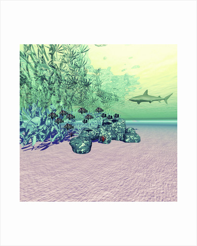 Coral reef life in the deep ocean. by Corey Ford