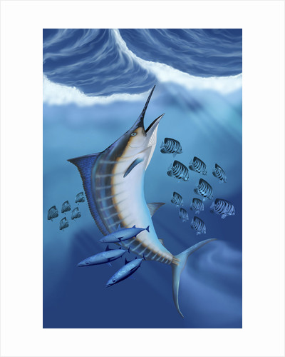 Small fish scatter as a huge Blue Marlin swims to the surface. by Corey Ford