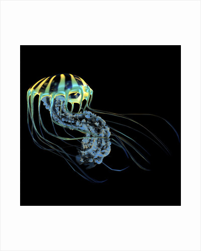 A bioluminescent Jellyfish. by Corey Ford