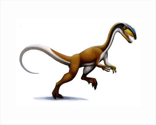 Megapnosaurus, a small dinosaur from the early Jurassic. by H. Kyoht Luterman