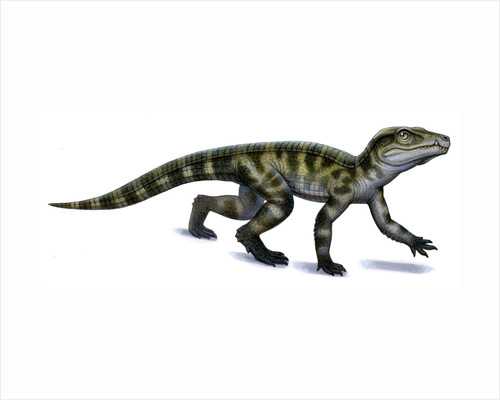 Protosuchus, an early Jurassic crocodylomorph. by H. Kyoht Luterman