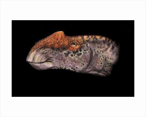 Aralosaurus portrait. by Jan Sovak