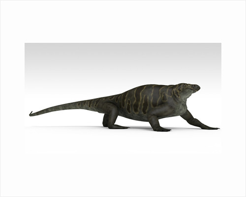 Cotylorhynchus, a large synapsid of the Early Permian period. by Kostyantyn Ivanyshen