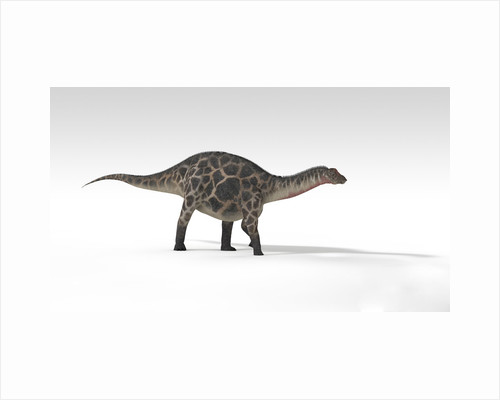 Dicraeosaurus dinosaur, white background. by Kostyantyn Ivanyshen