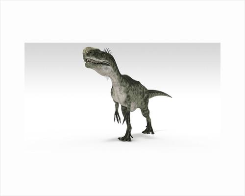 Monolophosaurus dinosaur, white background. by Kostyantyn Ivanyshen
