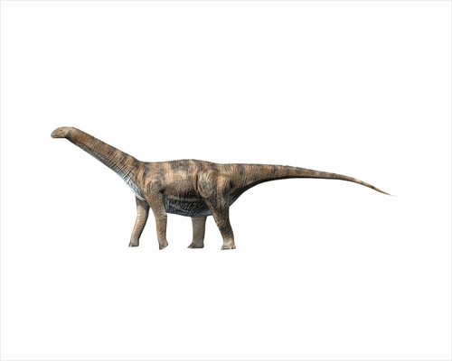 Cetiosaurus oxoniensis, Middle Jurassic of England. by Nobumichi Tamura