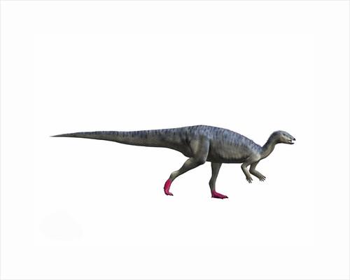 Elrhazosaurus nigeriensis, Early Cretaceous of Niger. by Nobumichi Tamura