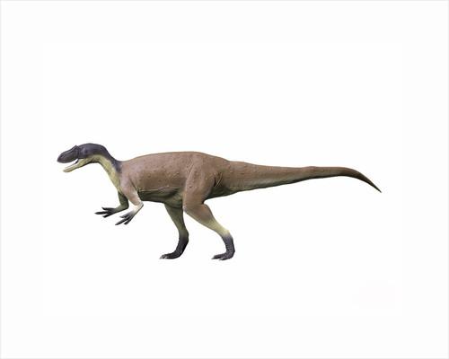 Megalosaurus bucklandii, Middle Jurassic of England. by Nobumichi Tamura