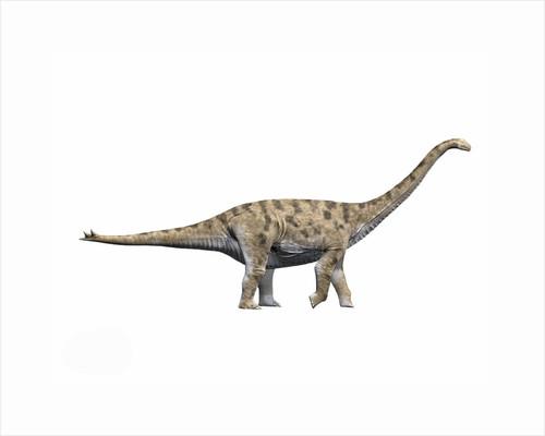 Spinophorosaurus nigerensis, Middle Jurassic of Niger. by Nobumichi Tamura