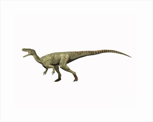 Spinostropheus gautieri, Middle Jurassic of Niger. by Nobumichi Tamura