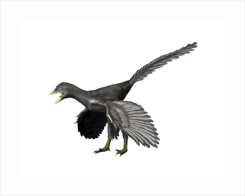 Archaeopteryx lithographica, Late Jurassic of Germany. by Nobumichi Tamura