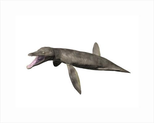 Pliosaurus kevani, Late Jurassic of England. by Nobumichi Tamura