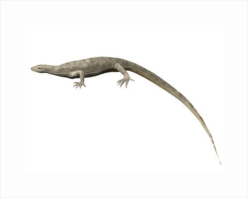 Thadeosaurus colcanapi, Late Permian of Madagascar. by Nobumichi Tamura