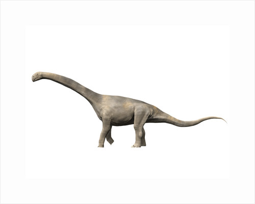 Turiasaurus riodevensis, Late Jurassic or Early Cretaceous of Spain. by Nobumichi Tamura