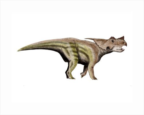 Achelousaurus dinosaur. by Nobumichi Tamura