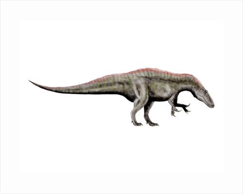 Acrocanthosaurus dinosaur. by Nobumichi Tamura