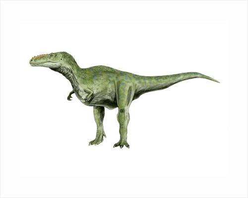 Alioramus dinosaur. by Nobumichi Tamura