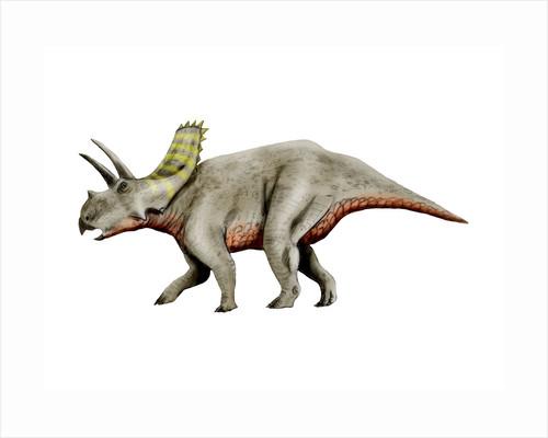 Arrhinoceratops dinosaur. by Nobumichi Tamura