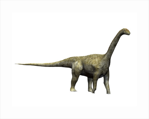 Camarasaurus dinosaur. by Nobumichi Tamura