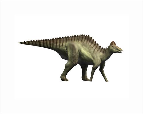 Hypacrosaurus dinosaur. by Nobumichi Tamura
