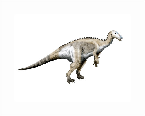 Mantellisaurus dinosaur. by Nobumichi Tamura