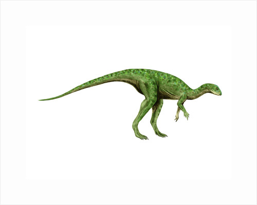 Othnielosaurus dinosaur. by Nobumichi Tamura