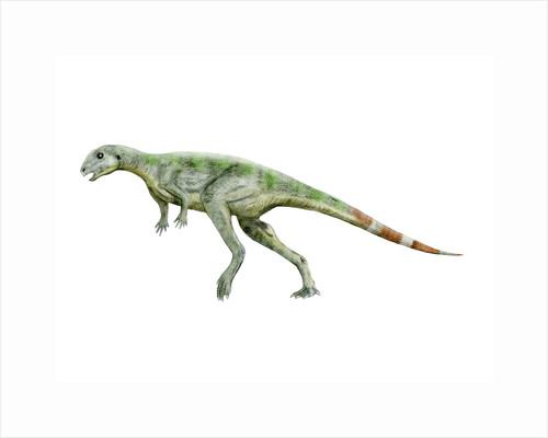 Pisanosaurus dinosaur. by Nobumichi Tamura