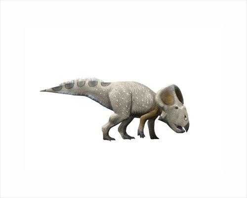 Protoceratops dinosaur. by Nobumichi Tamura