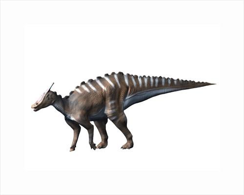 Saurolophus dinosaur. by Nobumichi Tamura