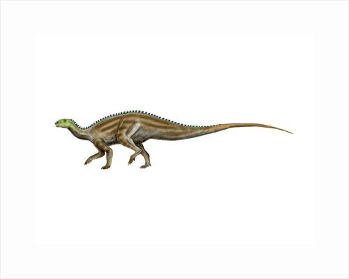 Tenontosaurus dinosaur. by Nobumichi Tamura