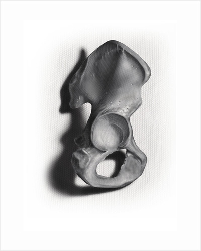 Black and white illustration of an os coxae on white background. by Nicholas Mayeux
