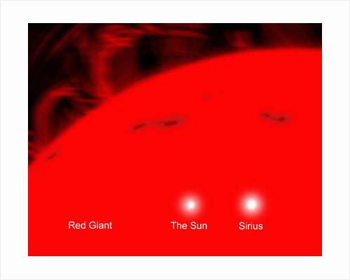 Our sun and the star Sirius compared to a red giant. by Ron Miller