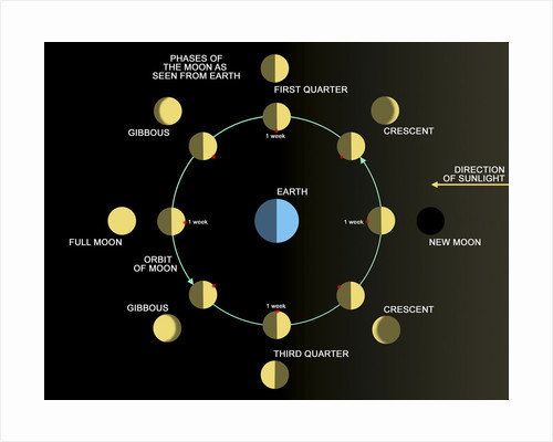 A diagram showing the phases of the Earth's moon. by Ron Miller