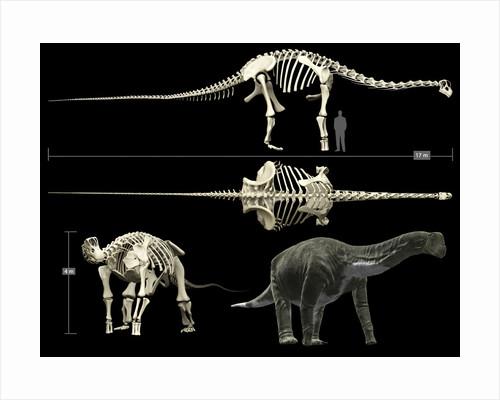Anatomy of a Titanosaur. by Rodolfo Nogueira