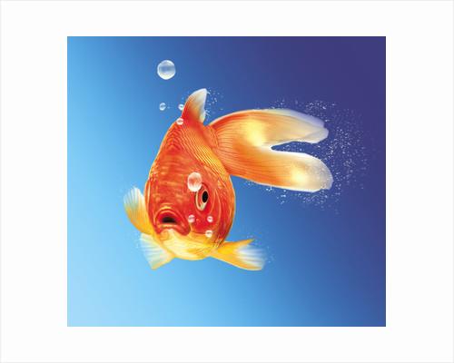 Goldfish with water bubbles. by Leonello Calvetti