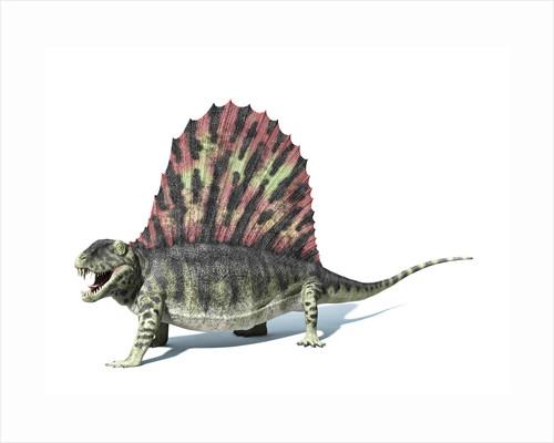 3D rendering of a Dimetrodon dinosaur. by Leonello Calvetti