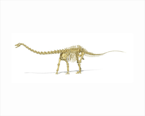 3D rendering of a Diplodocus dinosaur skeleton. by Leonello Calvetti