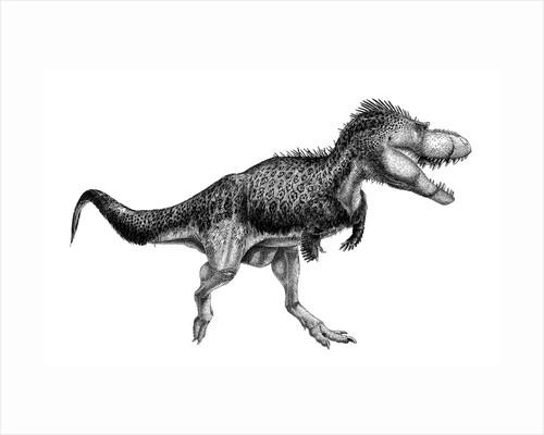 Black ink drawing of Albertosaurus sarcophagus. by Vladimir Nikolov