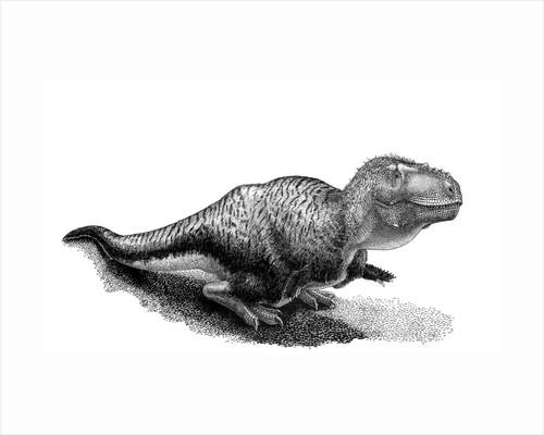 Black ink drawing of Tarbosaurus bataar. by Vladimir Nikolov