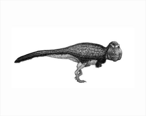 Black ink drawing of Tyrannosaurus rex. by Vladimir Nikolov