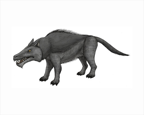 Andrewsarchus, an ungulate mammal from the Eocene epoch. by Vitor Silva