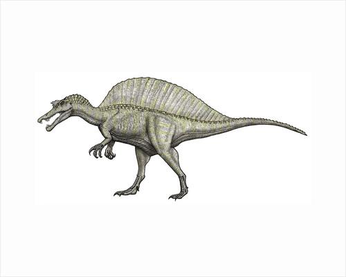 An albino Spinosaurus. by Vitor Silva